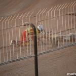 Detaliu foto - Speedway macec 2011 braila q1 0313
